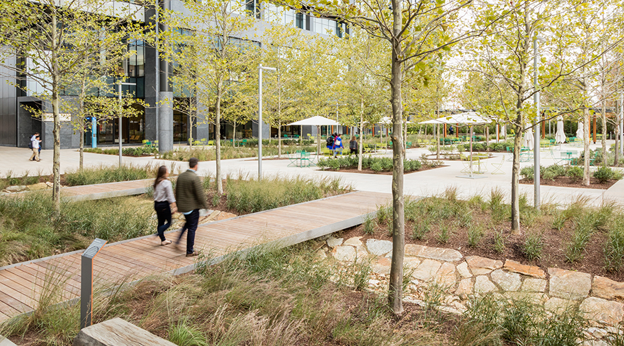 Corporate courtyard immersed in forest setting